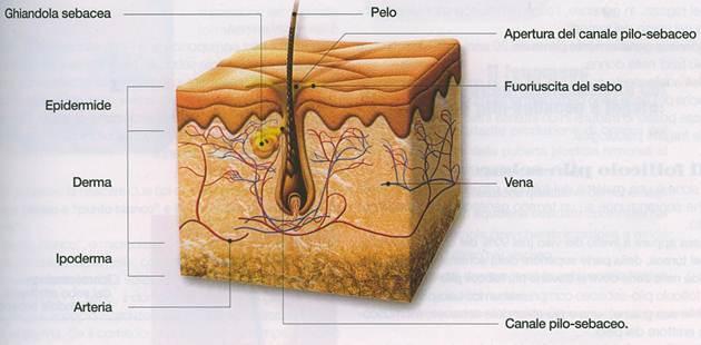 acne_cause_e_conseguenze_clip_image004