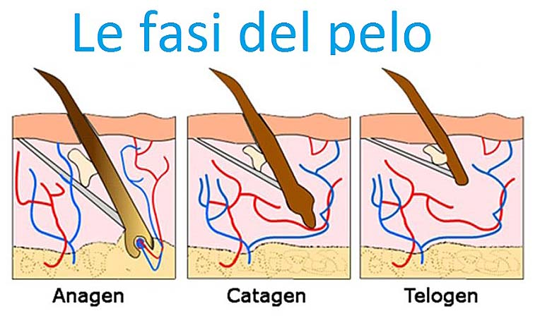 _fasi_del_pelo_mediostar_next_epilazione_laser